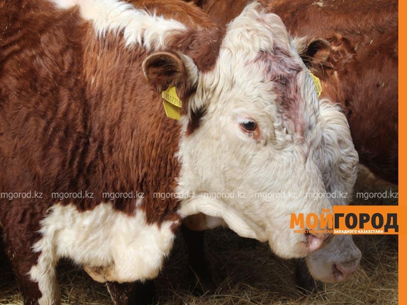 Фермеры ЗКО недовольны новыми правилами субсидирования