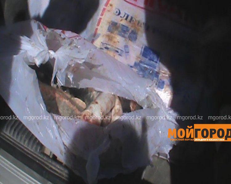 В Атырау задержана машина с крупной партией осетров  Still0421_00002 [800x600]