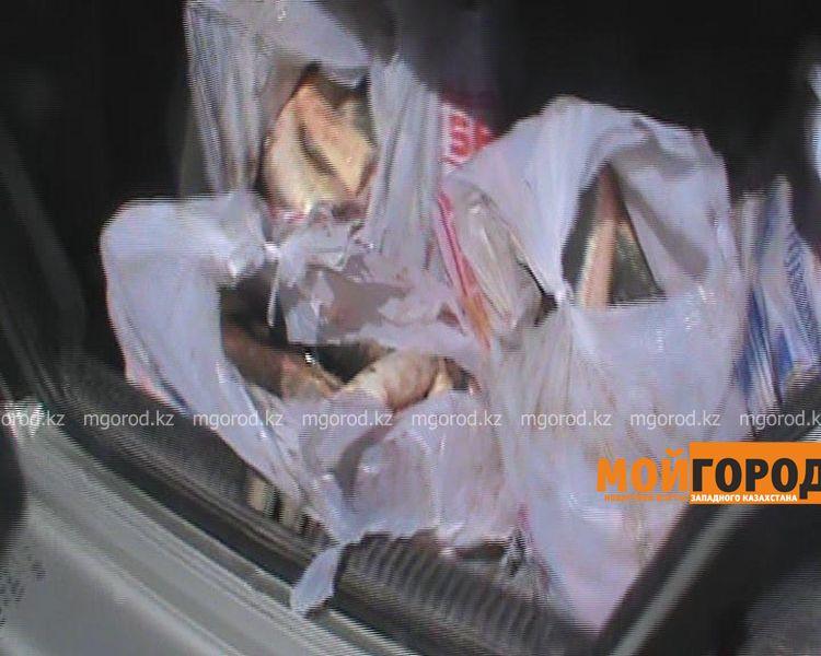 В Атырау задержана машина с крупной партией осетров  Still0421_00004 [800x600]