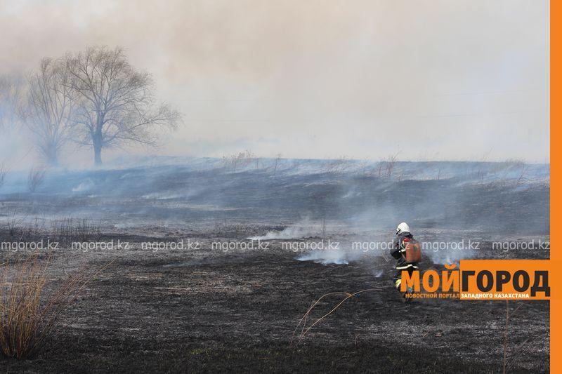 Новости Уральск - В Уральске горела сухая трава на площади 6 гектаров pojar (3)