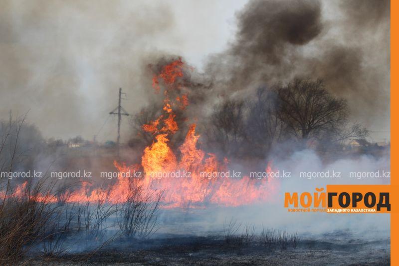 Новости Уральск - В Уральске горела сухая трава на площади 6 гектаров suhostoi (5)