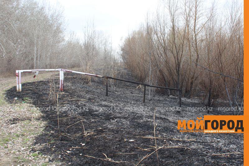 Новости Уральск - В Уральске горела сухая трава на площади 6 гектаров suhostoi (6)