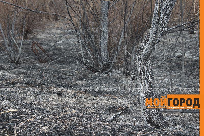 Новости Уральск - В Уральске горела сухая трава на площади 6 гектаров suhostoi (7)
