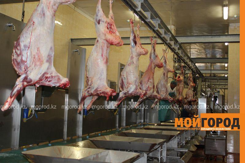В ЗКО завод по производству свежеохлажденной ягнятины проводит тестирование оборудования zavod (1)