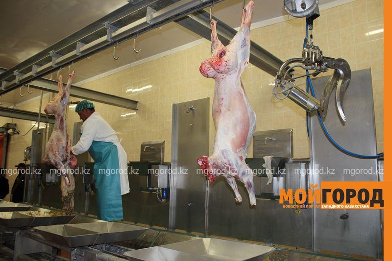 В ЗКО завод по производству свежеохлажденной ягнятины проводит тестирование оборудования zavod (3)