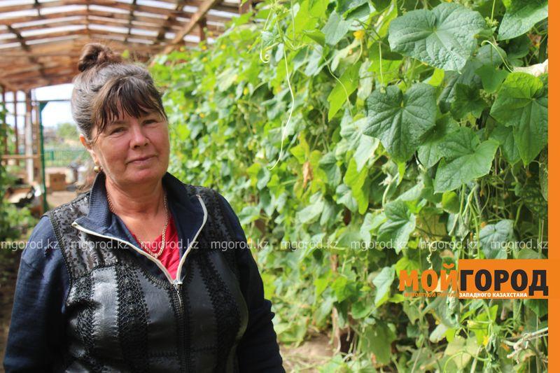 Новости Уральск - Как вырастить огурец в ноябре и почему сокращают картофельные поля klad (21)