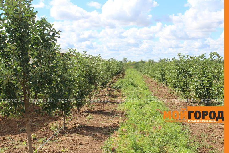 Новости Уральск - Как вырастить огурец в ноябре и почему сокращают картофельные поля klad (23)