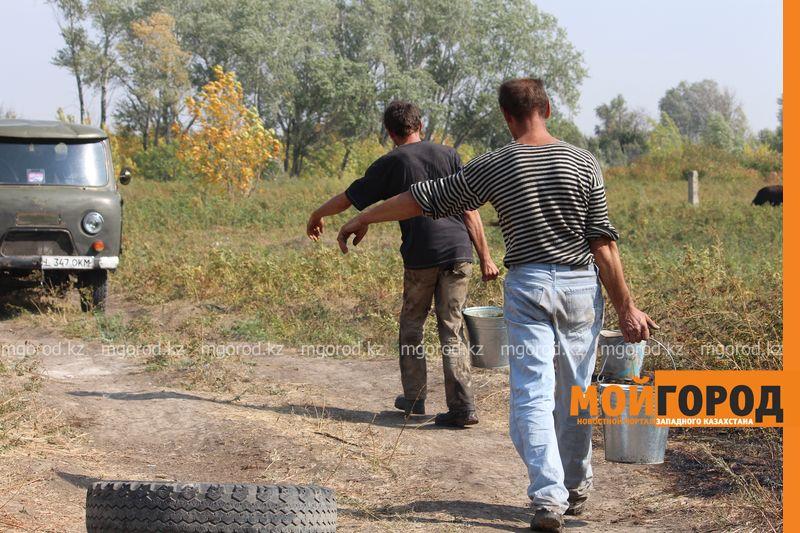 Сильный пожар уничтожает дома вблизи Уральска dachi (8)