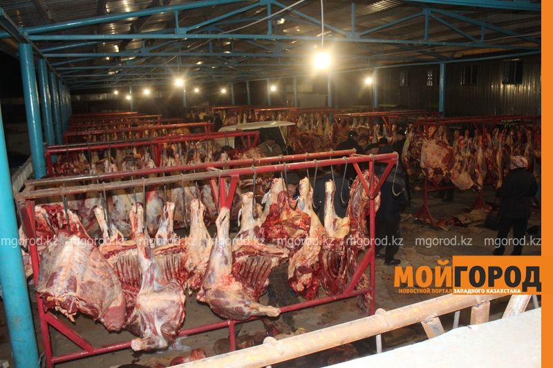 """30 тысяч справок, из-за которых началась забастовка """"мясников"""", раздали ветеринарам ЗКО IMG_0784 [800x600]"""