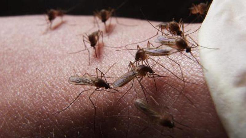 Новости Атырау - Атыраусцы возмущены осенним нашествием комаров