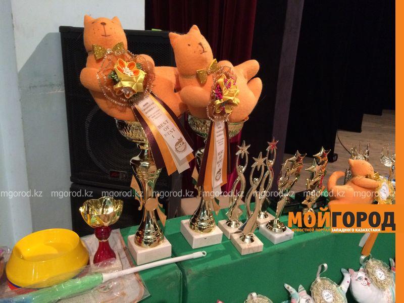 Новости Уральск - Бурманских кошек впервые привезли на выставку в Уральск koshki (11)