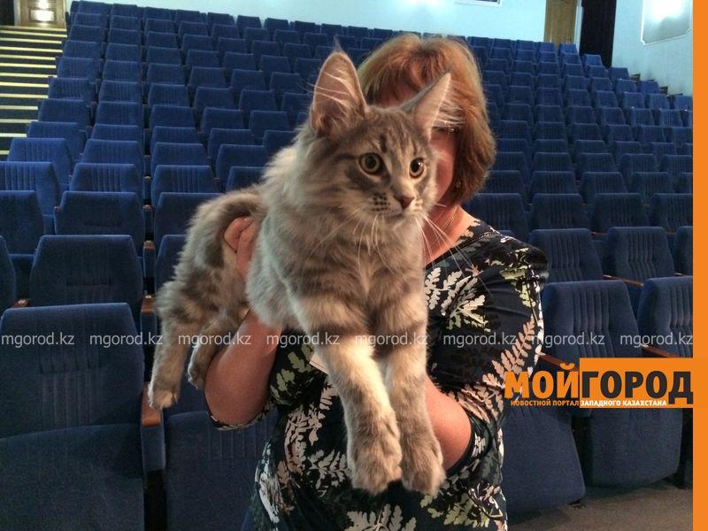 Новости Уральск - Бурманских кошек впервые привезли на выставку в Уральск koshki (16)