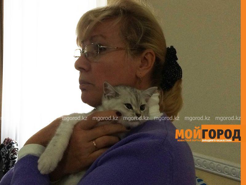 Новости Уральск - Бурманских кошек впервые привезли на выставку в Уральск koshki (19)