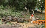 На месте массовой вырубки деревьев в Уральске построят гостиницу