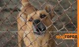 5-летнюю девочку покусала бродячая собака в ЗКО
