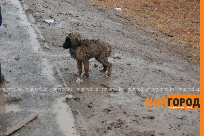 Новости Атырау - В Атырау из-за проливных дождей дети не могут добраться до школы DSC_8917 [800x600]