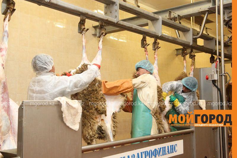 Новости Уральск - Уральская баранина идет на экспорт в Россию PRI_8545 (1) [800x600]