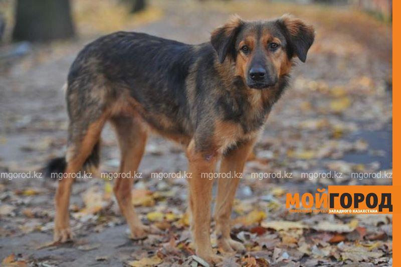 Новости Атырау - Волонтеры просят жителей Атырау не трогать бродячих собак с бирками