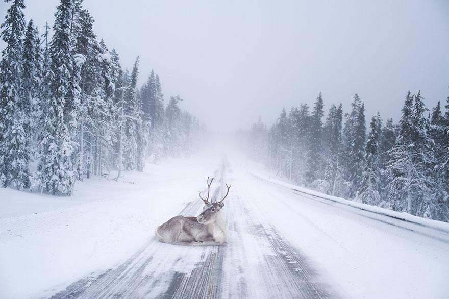 northern-lights-photography-finland-65-584e61b6acda6__880