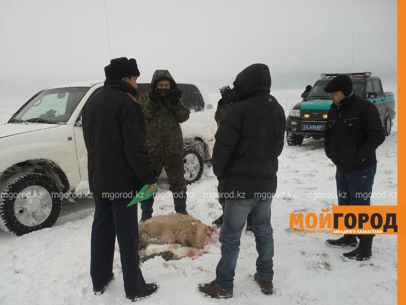 Новости Уральск - Десятки туш мертвых сайгаков сняли на видео в ЗКО (видео)