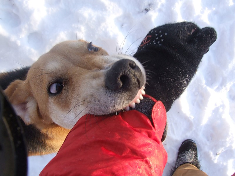 В Атырау мальчик, покусанный собаками, готовится к выписке titulka_45