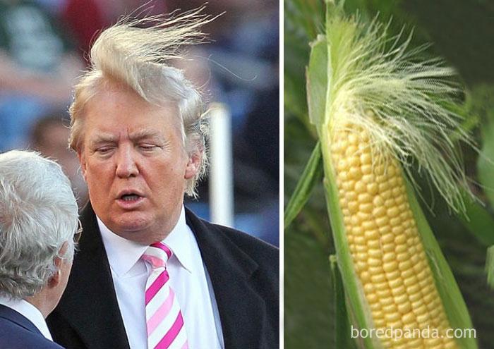 Дональд Трамп или початок кукурузы?