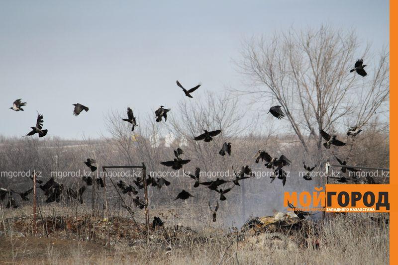 Новости Уральск - 40 миллионов тенге выделили на новый питомник и скотомогильник в ЗКО sobaki goryat (2)