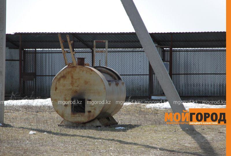 Новости Уральск - 40 миллионов тенге выделили на новый питомник и скотомогильник в ЗКО sobaki goryat (5)