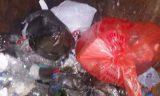 Уральцы обнаружили гараж, где расчленяют собак