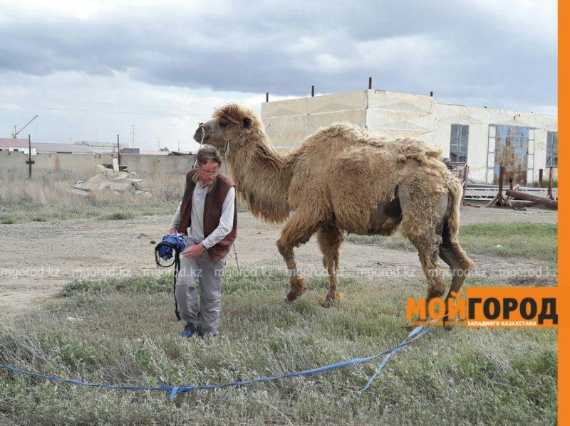 Новости Атырау - Путешественник из Швеции идет пешком через весь Казахстан с верблюдом 57cf1308-bc2d-4bf0-95c2-a86529cfc6ff
