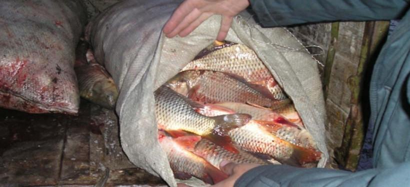 2,5 тонны рыбы пытались вывезти жители ЗКО из Атырау 65324_b0