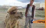 Путешественник из Швеции идет пешком через весь Казахстан с верблюдом