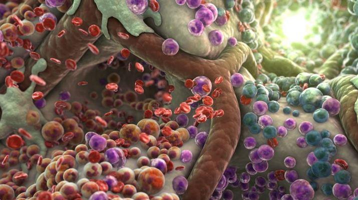 токсыины-в-организме