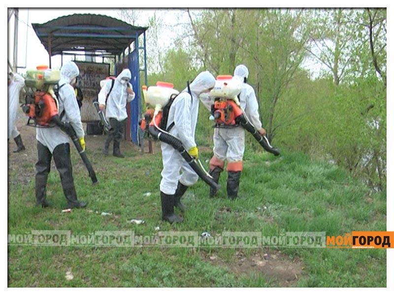 Новости Атырау - Жители Атырау массово скупают средства против комаров