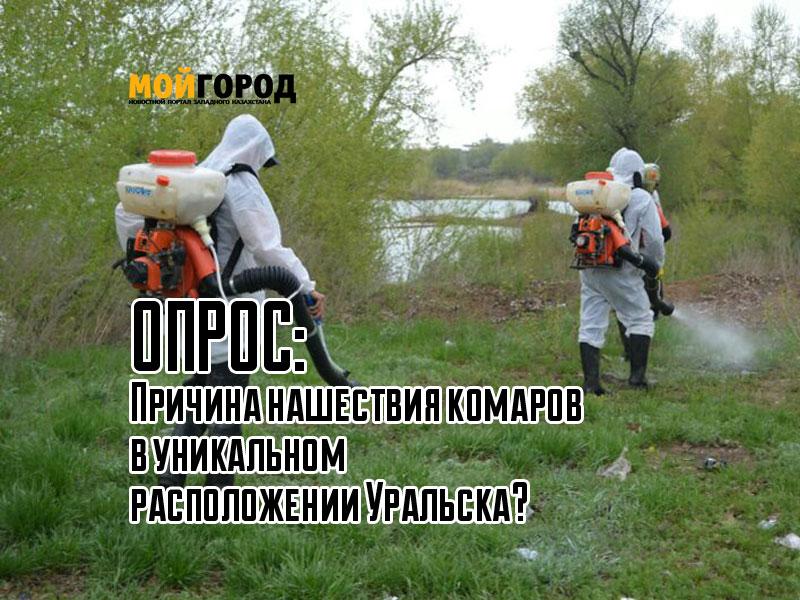 Новости Уральск - ОПРОС: Причина нашествия комаров в уникальном расположении Уральска? opros_mg-06-16