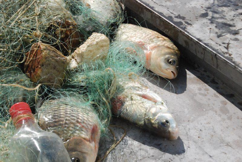 Новости Атырау - В Казахстане ввели запрет на китайские рыболовные сети DSC_2673(1)