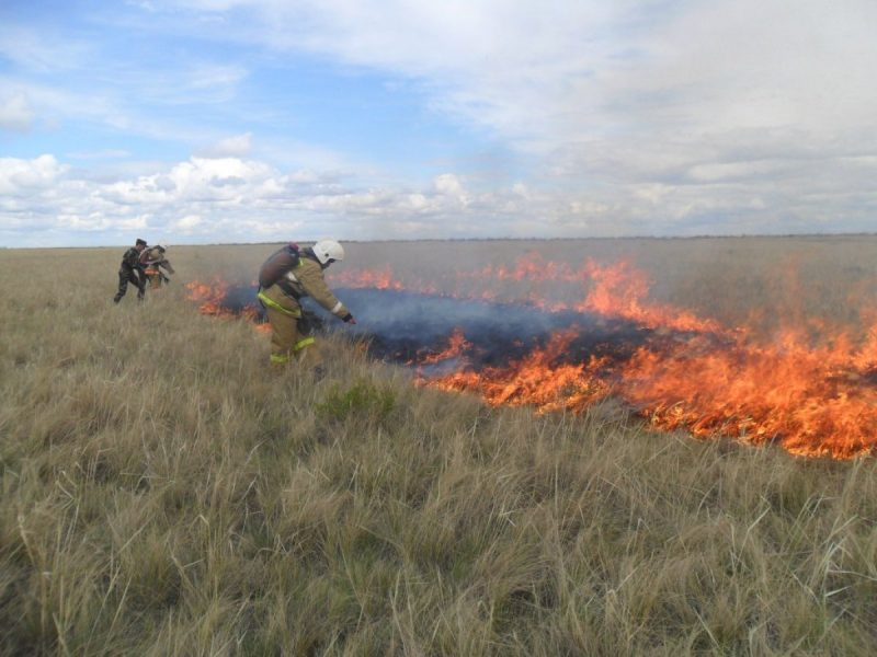 Новости Атырау - За выходные в Атырауской области выгорело 6 тысяч гектаров земли photo_183657
