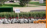 В цветочных клумбах в центре Уральска рекламируют сетевой бизнес
