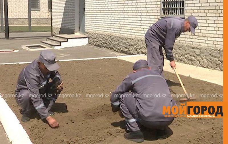 Заключенные колонии строгого режима в Уральске выращивают укроп и петрушку ru 170-3 (2)