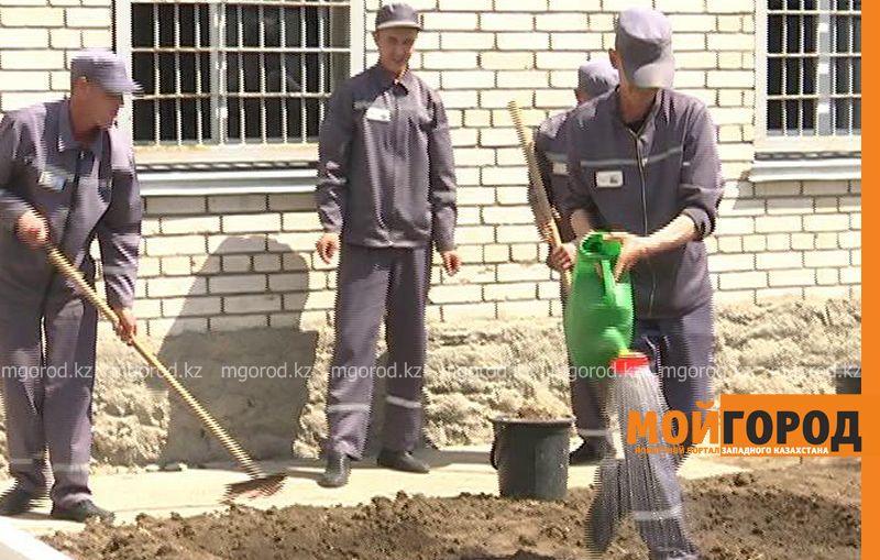 Заключенные колонии строгого режима в Уральске выращивают укроп и петрушку ru 170-3 (3)