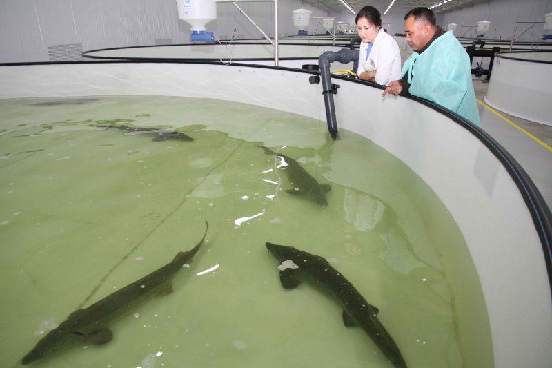 Новости Атырау - В Казахстане рыбоводы получат субсидии от государства