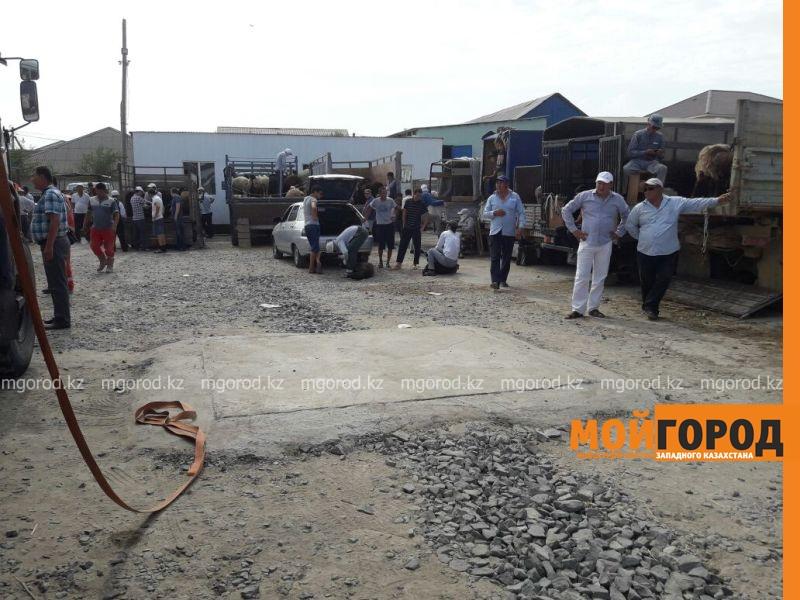 Новости Атырау - Курбан Айт в Атырау: баранов увозят на скорой помощи