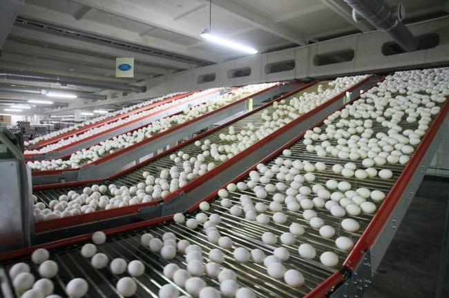 Новости Атырау - Жители Атырау скоро откажутся от привозных яиц news1454738435