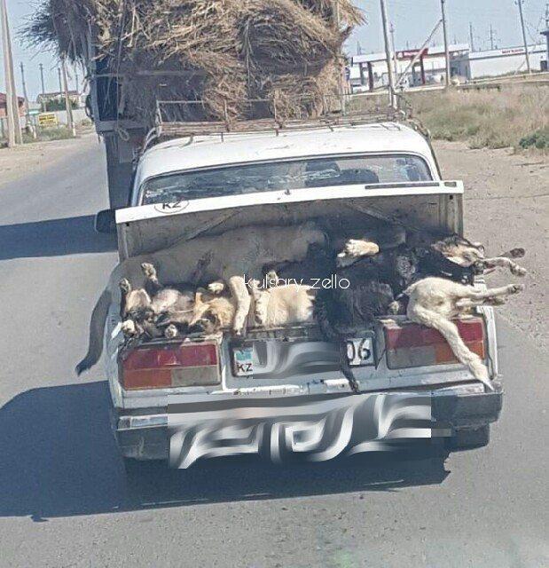 Новости Атырау - В Атырауской области собак отстреливают на глазах у детей