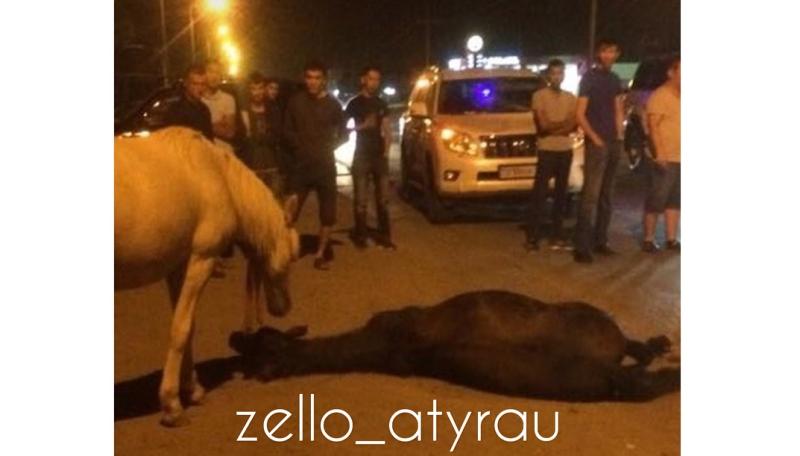 Новости Атырау - В Атырау на проезжей части сбили лошадь (видео)