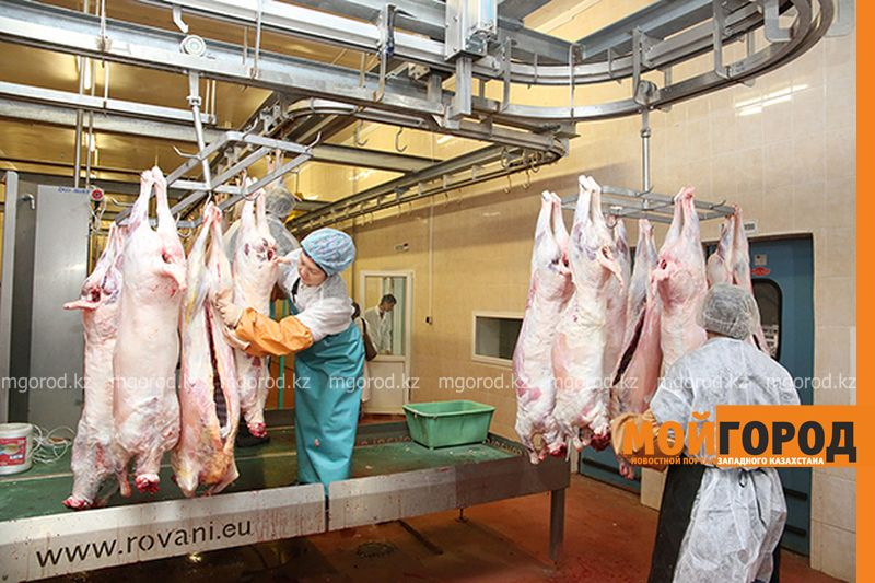 Новости - В МСХ РК спрогнозировали выручку в размере 2,6 млрд долларов с экспорта мяса