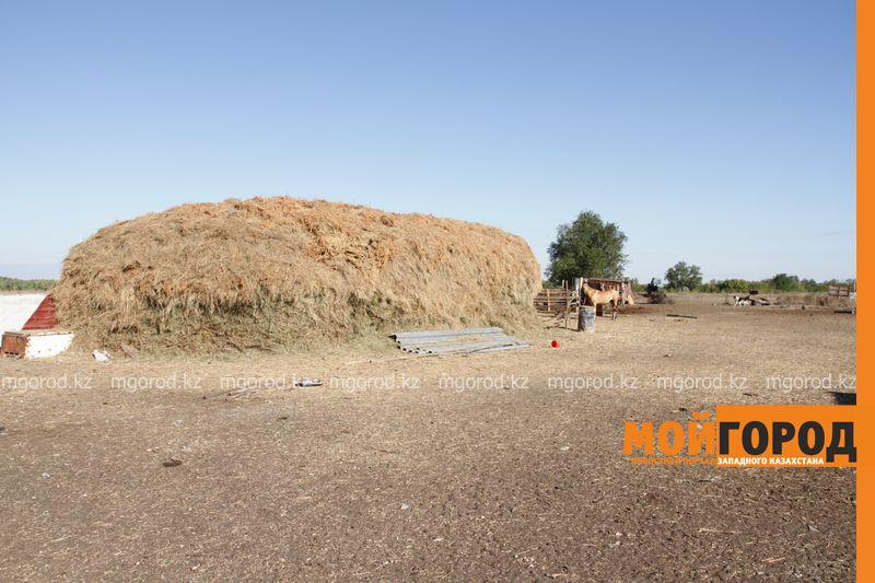 Новости Уральск - Около 1 млн гектаров сельхозземель возвращены в оборот в ЗКО