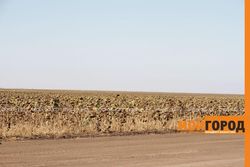 У предпринимателя ЗКО более 10 тысяч гектаров посевных земель