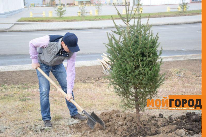 Новости Уральск - В ЗКО до 2025 года планируют восстановить порядка 7 тысяч га леса