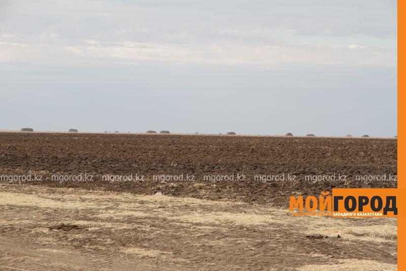 Новости Уральск - 8 тысяч гектаров неиспользуемых земель были возвращены государству в ЗКО